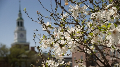 A tree in bloom in front of Baker Tower