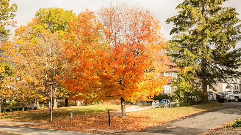 Fall foliage on Dartmouth's campus.