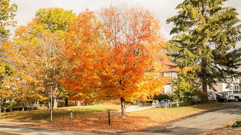 Fall foliage on Dartmouth's campus.