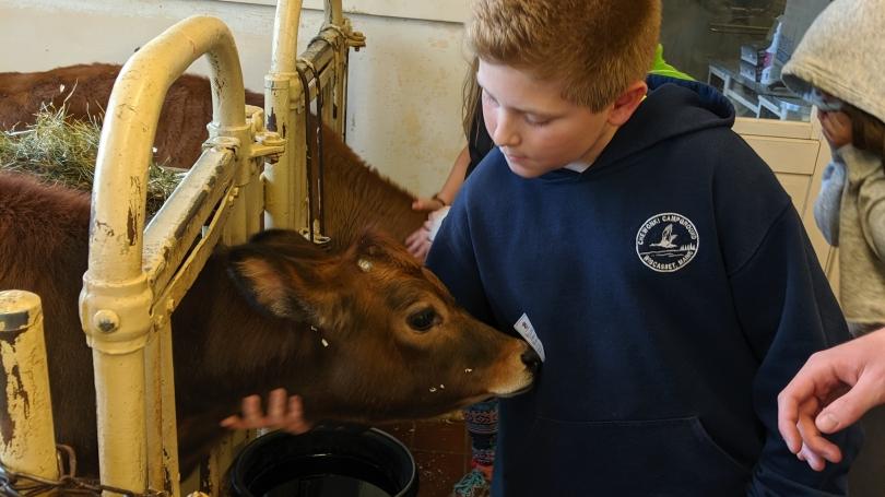 Mentee in barn, petting a cow
