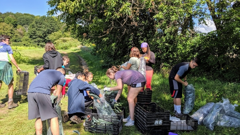 Volunteer Students with Willing Hands package kale