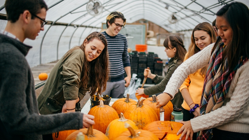 A group of students carving pumpkins.