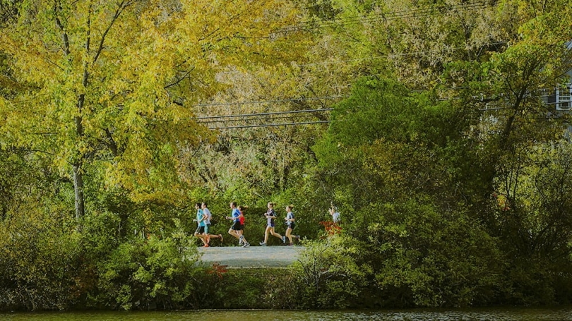 runners on road under tree cover