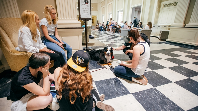 A therapy dog sits amongst students in the library.