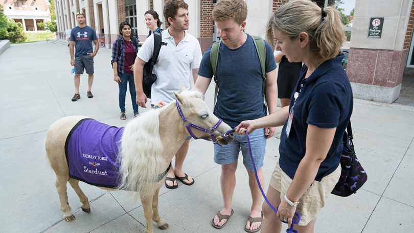 A therapy horse meets students.