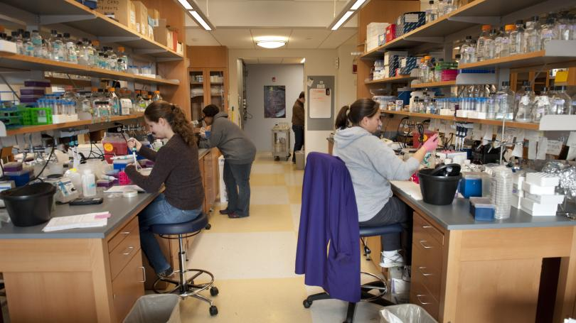 Interns working in a lab